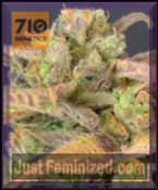 710 Genetics High Priority Feminised Cannabis Seeds